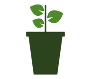 Potted plant icon with illustrated Stock Image