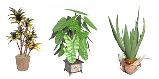 Potted plant illustration Stock Image