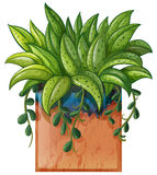 A potted plant Royalty Free Stock Photography