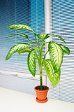 Potted Plant In Office Royalty Free Stock Photo