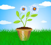 Potted Plant Means Cultivation Gardening And Plants Stock Image