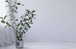 Potted plant in a minimalist white room Royalty Free Stock Photo