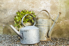 Potted plant in old an galvanised teapot. Potted plant in an old galvanised teapot standing in a group with a kettle and watering can against a grungy rustic royalty free stock image