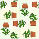 Potted Plant. Pattern. Royalty Free Stock Images