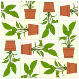Potted Plant. Pattern. Royalty Free Stock Photos