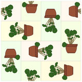 Potted Plant. Pattern. Royalty Free Stock Photo