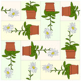 Potted Plant. Pattern. Stock Photo