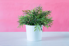 A potted plant on a pink background Stock Photo