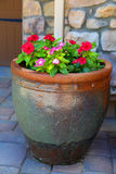 Potted plant Stock Photography