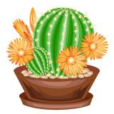 Potted plant in a pot. The green cactus is spherical with tubercles covered with spines. Mammillaria, hymnocalicium. Lovely hobby stock illustration