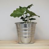 Potted plant Royalty Free Stock Photography