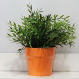 Potted plant Stock Photos