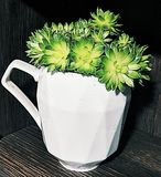 A plant in a mug royalty free stock photos