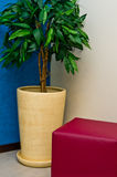 Potted plant Royalty Free Stock Image