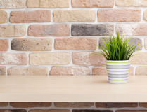 Potted plant on shelf in front of brick wall Stock Photos