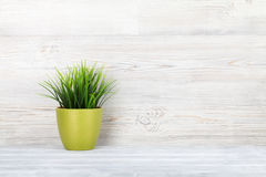 Potted plant on shelf. In front of wooden wall. View with copy space royalty free stock photo