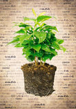 Potted Plant Showing Roots Stock Photography