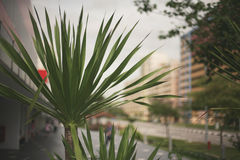 Potted plant on the streets Stock Photography