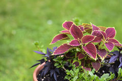 Potted plant on Tree stump Royalty Free Stock Photography