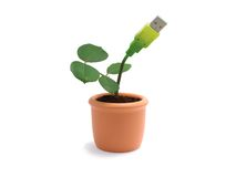 Potted plant with usb cable Royalty Free Stock Image