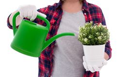Plant and watering can in female hands isolated on white background. Potted plant and watering can in female hands isolated on white background stock photos