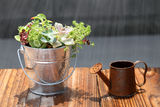 Potted plant with a watering can Stock Photos