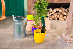 Potted plant and watering can on porch. Close-up view of potted plant and watering can on porch royalty free stock photo