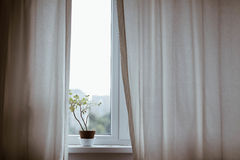 Potted plant in windowsill Stock Photo