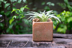 Potted plant on wood table Royalty Free Stock Photography
