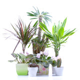 Potted plants Royalty Free Stock Photo