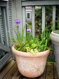 Potted Plants. On a balcony stock images