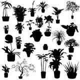 Potted plants Royalty Free Stock Photography