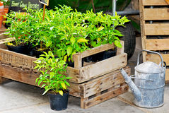 Potted plants. In crates for sale Royalty Free Stock Image