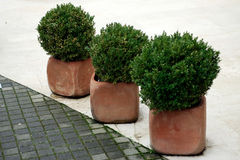 Potted plants. Three potted plants by foot way royalty free stock images