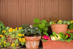 Potted plants. Nice variety and arrangement of potted plants against a wooden background Royalty Free Stock Photo