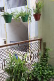 Potted plants Stock Photo