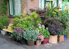 Potted plants collection Royalty Free Stock Images