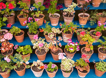 Potted Garden Plants on Display Royalty Free Stock Photography