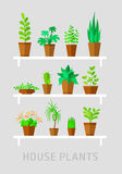 Potted plants flat vector set Royalty Free Stock Photos