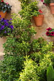 Potted plants and flowers in a garden Royalty Free Stock Photos