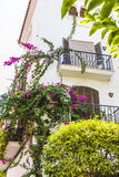 Potted plants and flowers on the streets of Marbella, Malaga Spa Stock Photos