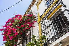 Potted plants and flowers on the streets of Marbella, Malaga Royalty Free Stock Photo