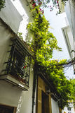 Potted plants and flowers on the streets of Marbella, Malaga Royalty Free Stock Photos