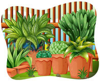 Potted plants. In the garden Royalty Free Stock Image