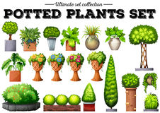 Potted plants in the garden. Illustration Stock Image