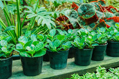 Potted plants in the garden Stock Photography