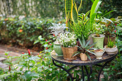 Potted plants in the garden. Small lovely potted plants in the garden Stock Images