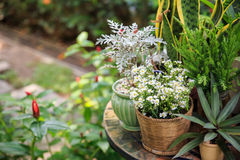 Potted plants in the garden. Small lovely potted plants in the garden Royalty Free Stock Photography