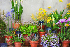 Potted Plants Stock Photos