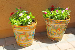 Potted plants Stock Photography